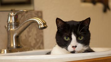 In-Home Veterinarian Services