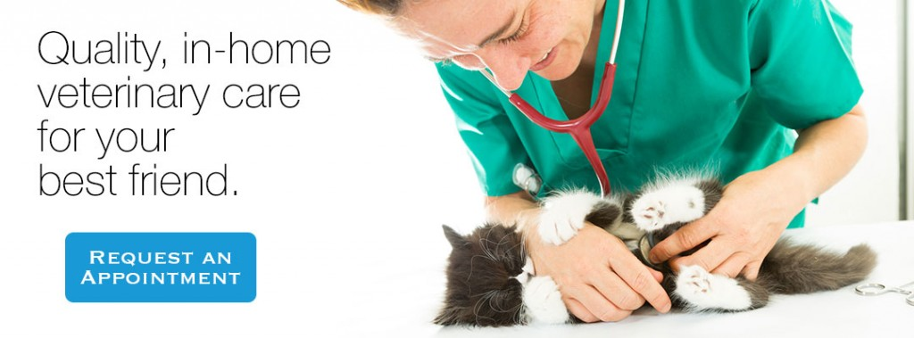 Quality in-home veterinary services. Contact us to make an appointment.